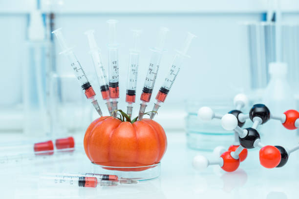 genetic modification - genetic modification stock photos and pictures