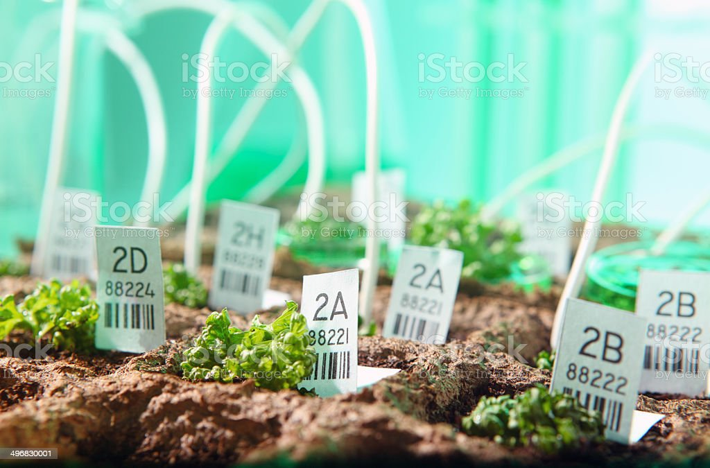 Genetic research: biotechnology greenhouse, genetically modified organism, plants and seeds, stock photo