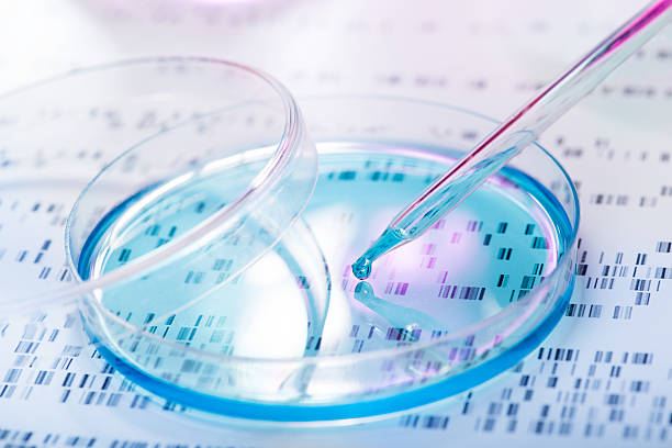 Genetic research DNA sample being pipetted into petri dish with DNA gel in background stem cell stock pictures, royalty-free photos & images