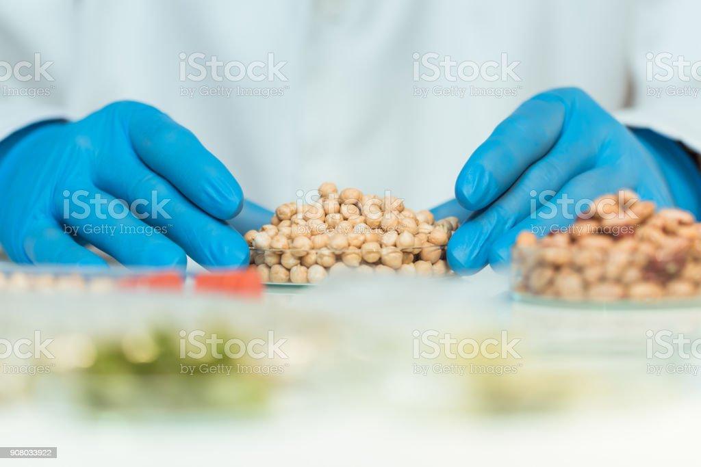 Alimento geneticamente modificado - foto de acervo