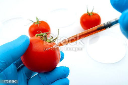Genetically modified foods or GMO food, genetic improvement of produce and dna manipulation conceptual idea with medical practitioner injecting pharmaceutical substance with syringe in lab background