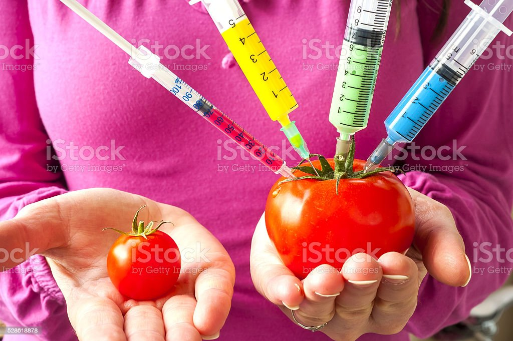 Genetically modified organism - ripe tomato with syringes in the stock photo