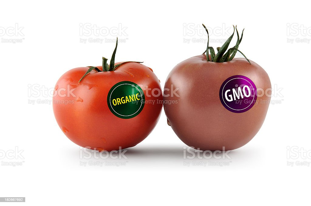 Genetically modified organisms stock photo