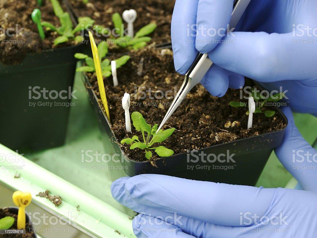 Genetisch veränderter Pflanzen Lizenzfreies stock-foto