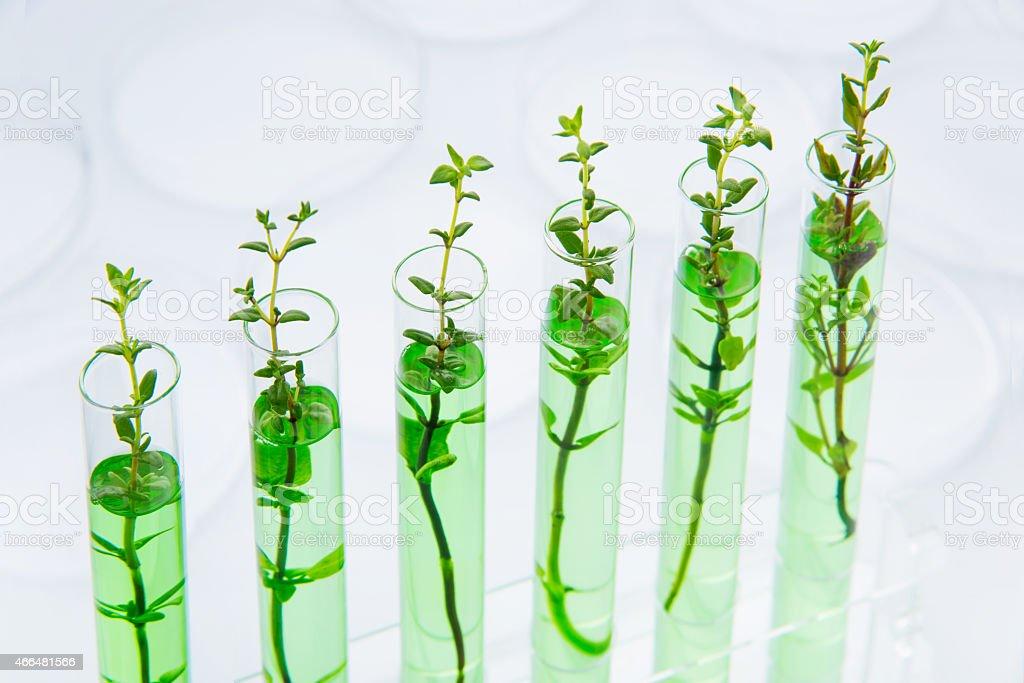 Genetically modified plants stock photo