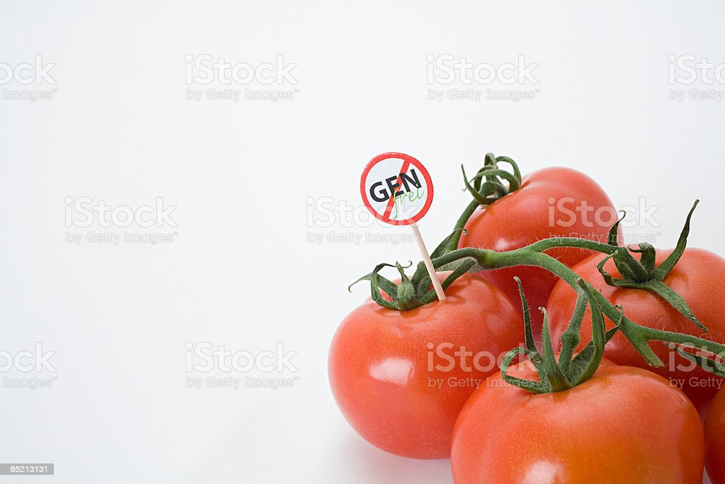 Genetically modified tomatoes royalty-free stock photo