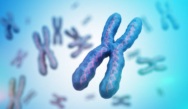 Genetics concept. Many X chromosomes with DNA molecules. 3D rendered illustration. stock photo