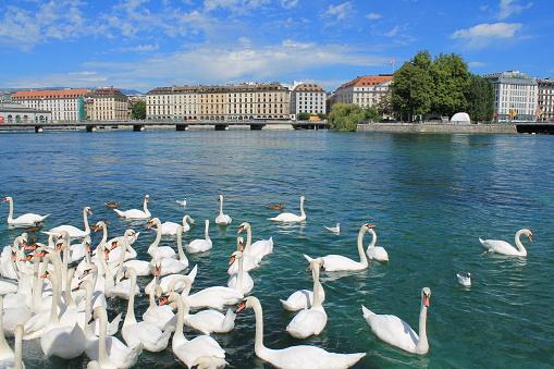 Geneva and Lake, Switzerland