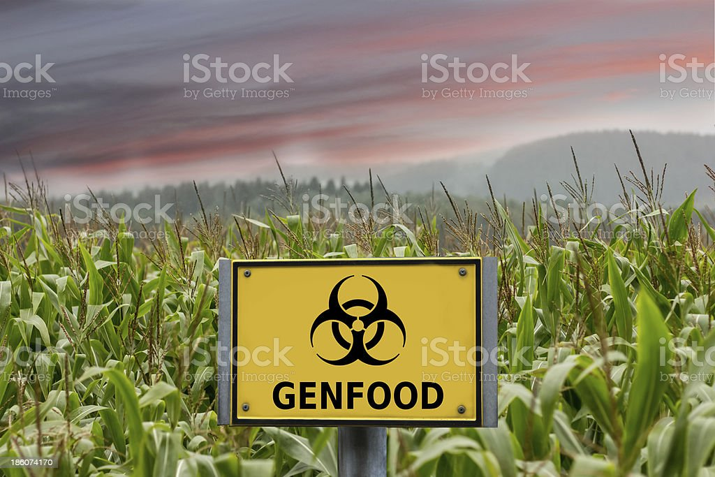 Genfood biohazard sign in a cornfield stock photo