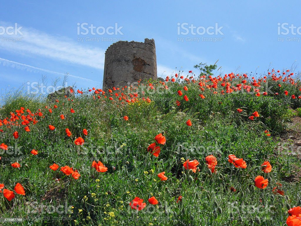 Genoese fortress Cembalo, Popies on a hill, Balaklava, Crimea stock photo