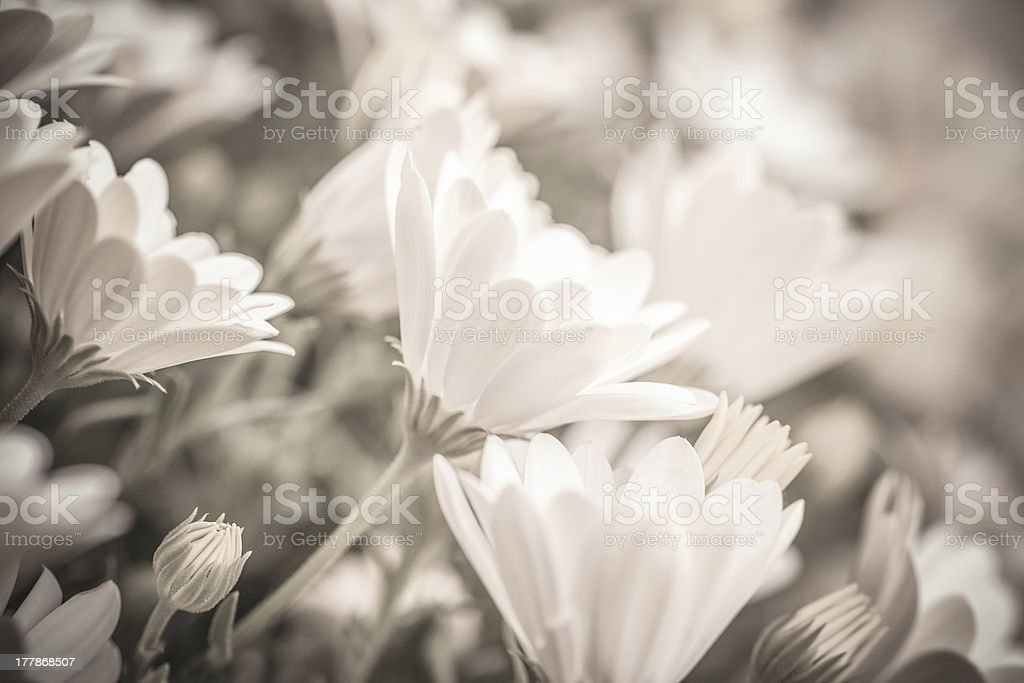 Gentle floral background royalty-free stock photo