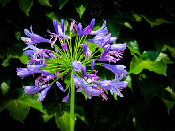 Gentle Flower stock photo