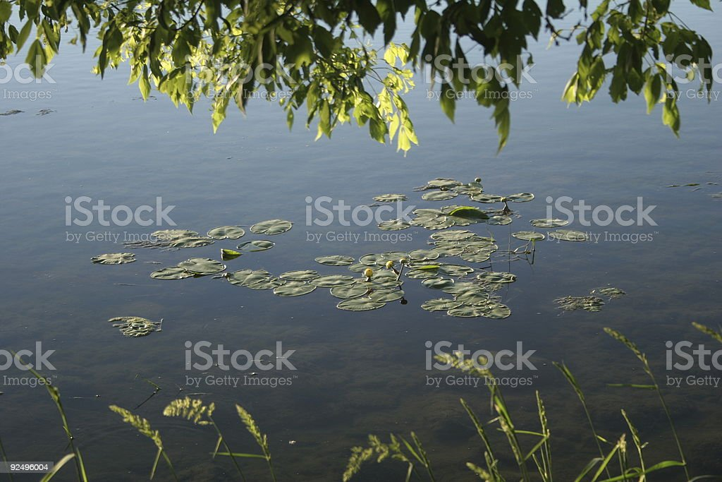 gentle meadow royalty-free stock photo