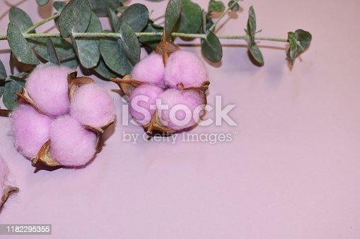 1164403347 istock photo Gentle pink background with  eucalyptus and cotton. 1182295355
