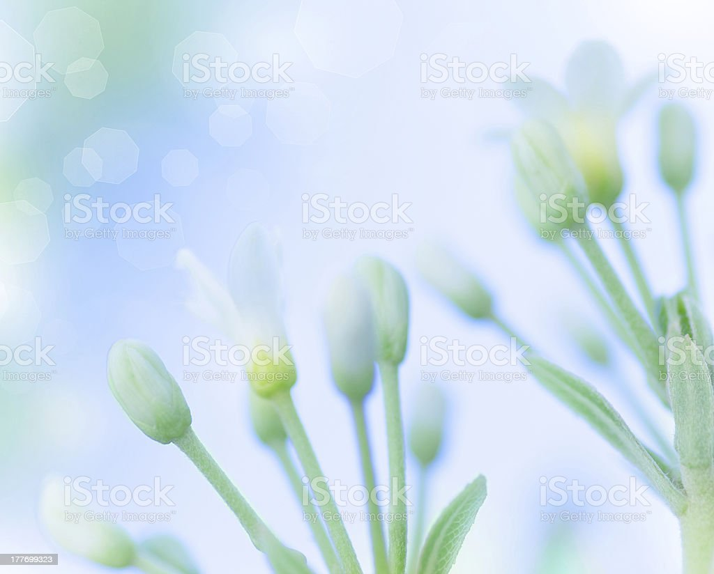 Gentle spring flowers royalty-free stock photo