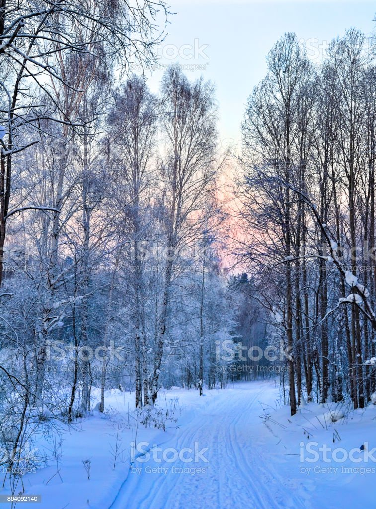 Gentle winter pink morning on a snowy forest road royalty-free stock photo