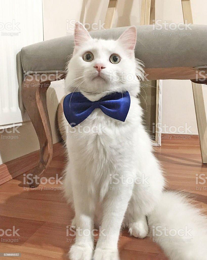 Gentleman Cat stock photo