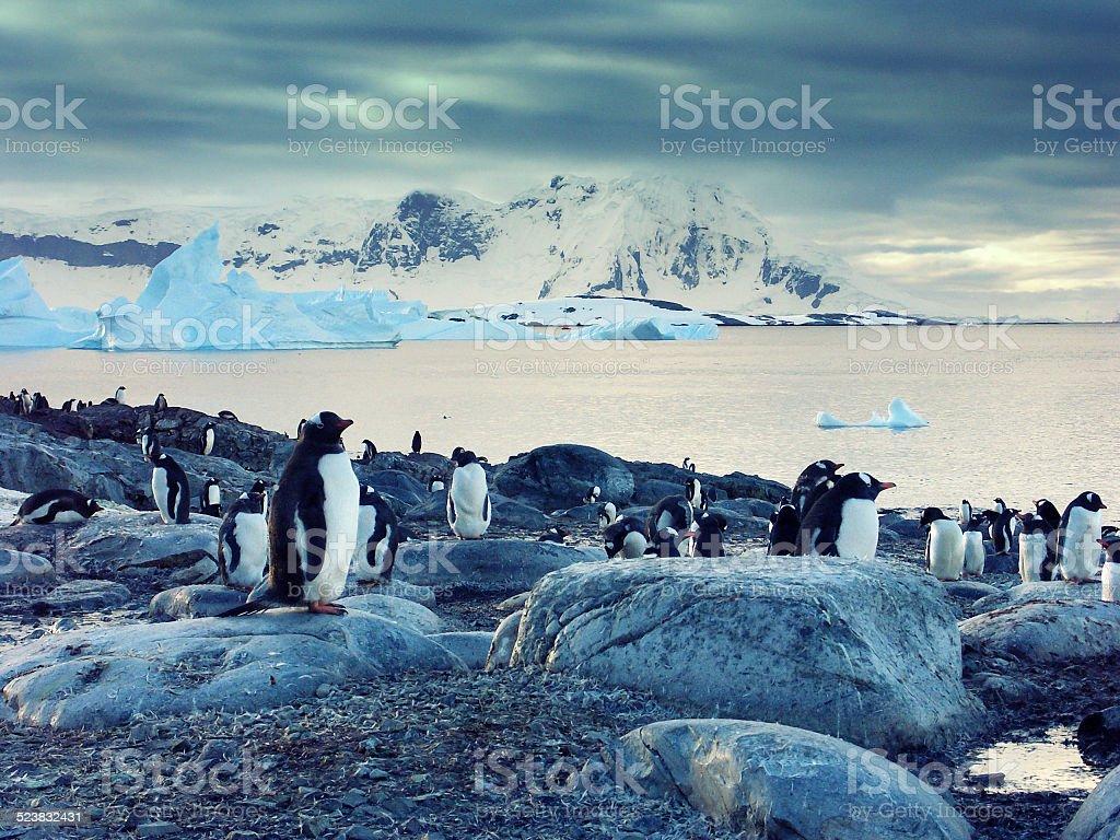 Gentoo penguins on the Antarctic Peninsula圖像檔