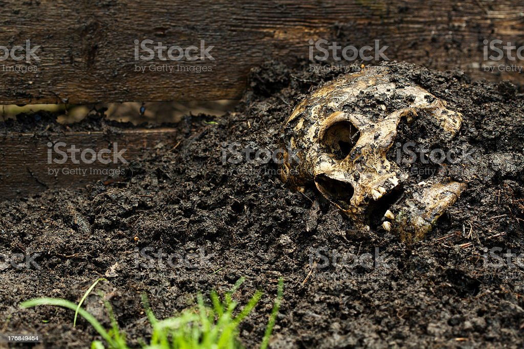 Genuine human skull in concept stock photo