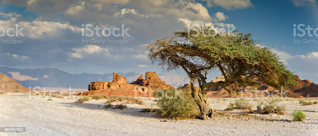 Geological park Timna, Middle East, Israel stock photo