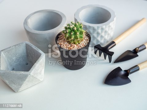 Cactus plant in black plastic pot with empty geometric concrete planters and garden tool set on white background with copy space, agriculture concept.