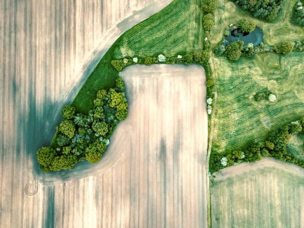 geometrie der felder - deutsche bäume stock-fotos und bilder