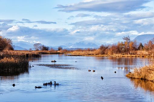 George C. Reifel Migratory Bird Sanctuary in autumn, Delta, BC, Canada