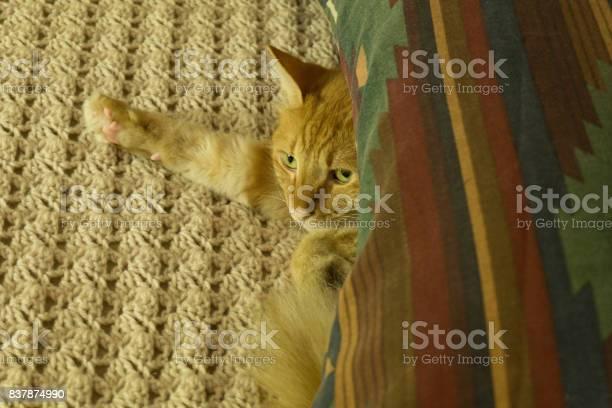 George the cat under pillow picture id837874990?b=1&k=6&m=837874990&s=612x612&h=6r63bss5xwvpkptvdmdpf8wki egnpds7bivhaqkyhu=