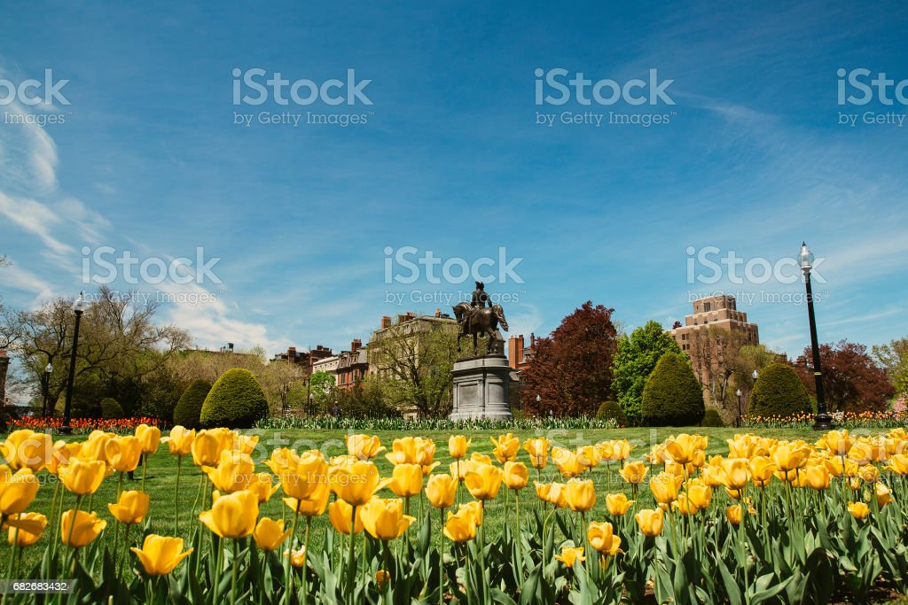 George Washington statue and yellow tulips in Boston Public Garden stock photo