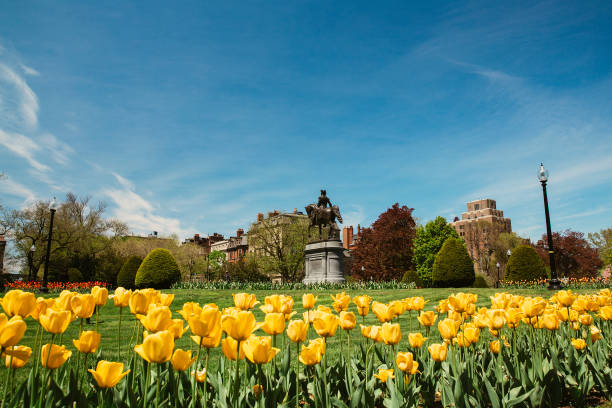 George Washington statue and yellow tulips in Boston Public Garden stock photo