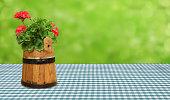 geranium plant on a beer garden table