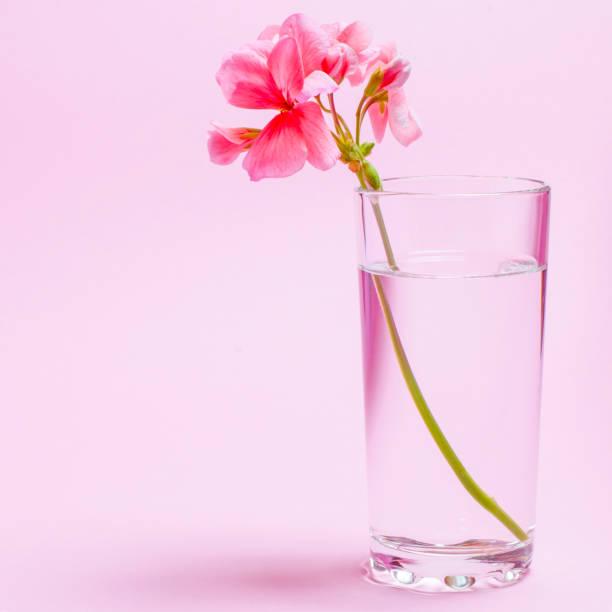 Geranium flower of coral color stands in a glass beaker with clear picture id1203009449?b=1&k=6&m=1203009449&s=612x612&w=0&h=ul1mb47llwausg7zttm l8ipuyfr1vv3j42a0ndlxqi=