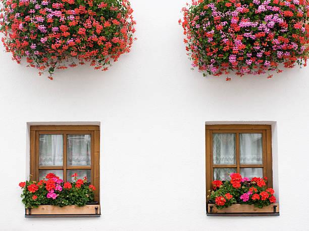 Geranie Blume Window Box – Foto