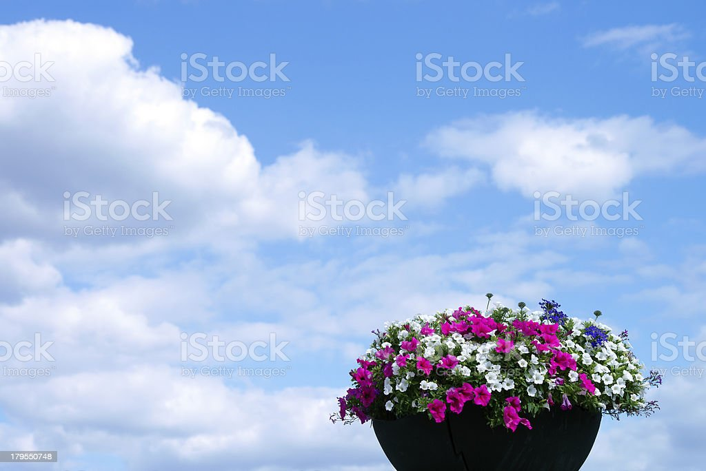 Geranium flowers in front of the cloudy sky. royalty-free stock photo