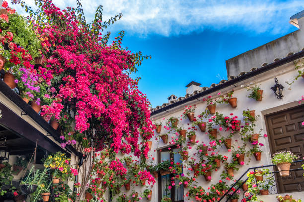 Geraniums and bougainvillea inside one of the patio-participants at the traditional patio festival (Patios de Cordoba) in Cordoba, Andalusia, Spain Geraniums and bougainvillea inside one of the patio-participants at the traditional patio festival (Patios de Cordoba) in Cordoba, Andalusia, Spain courtyard stock pictures, royalty-free photos & images