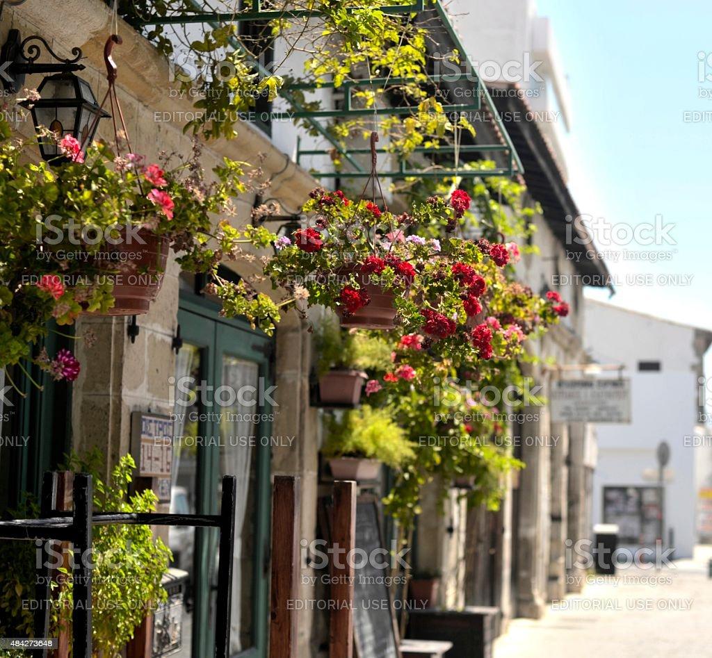 Geraniums in Larnaca stock photo