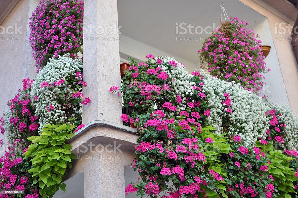 Geraniums on balcony. royalty-free stock photo