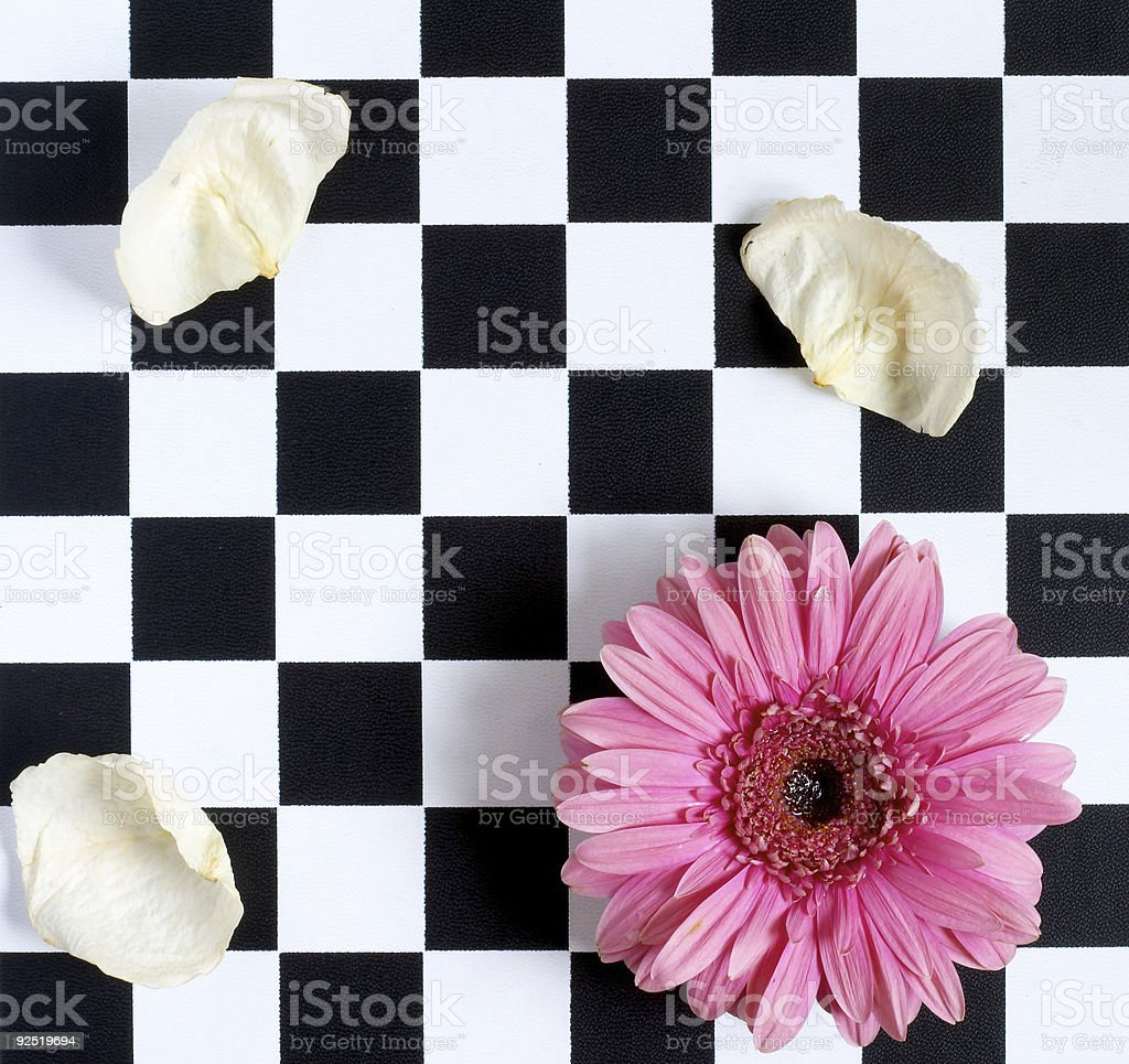 Gerber and chess board stock photo