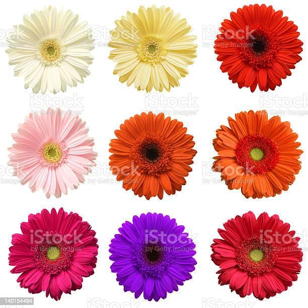 Gerber daisy collection picture id140154494?b=1&k=6&m=140154494&s=612x612&h=ywphnkomhszg1lirccojcoermukuchfupz8rs8cwwf0=