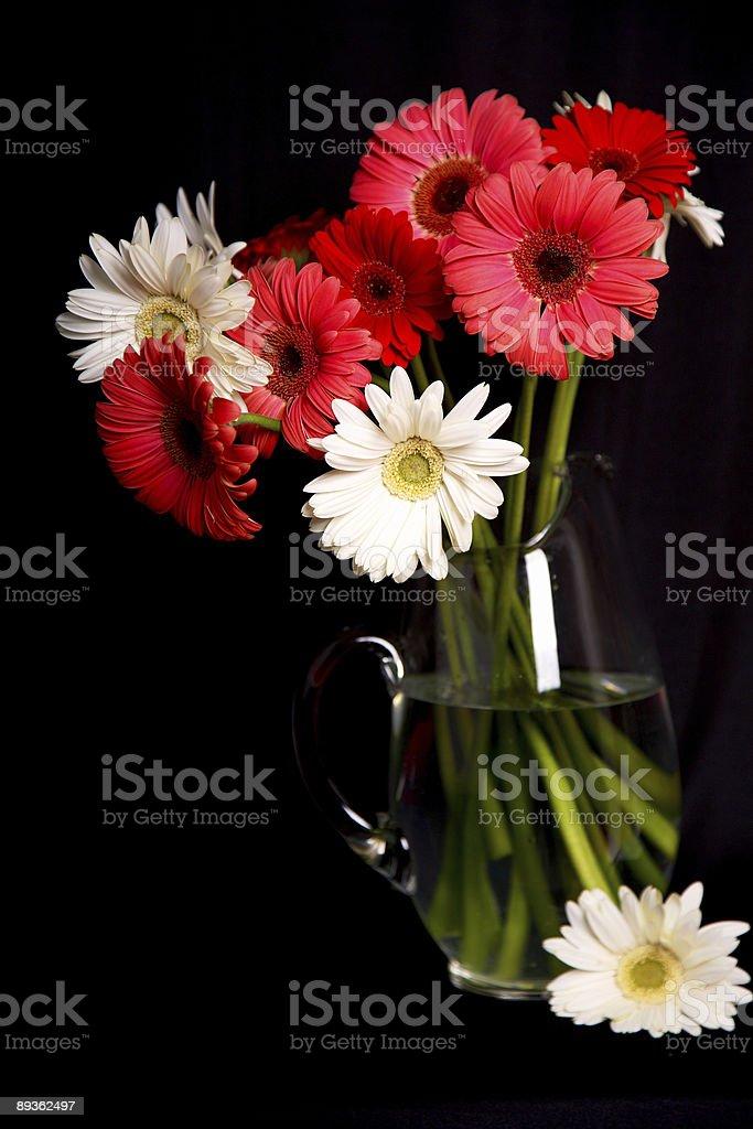 daisy gerber bouquet de la Saint-Valentin photo libre de droits