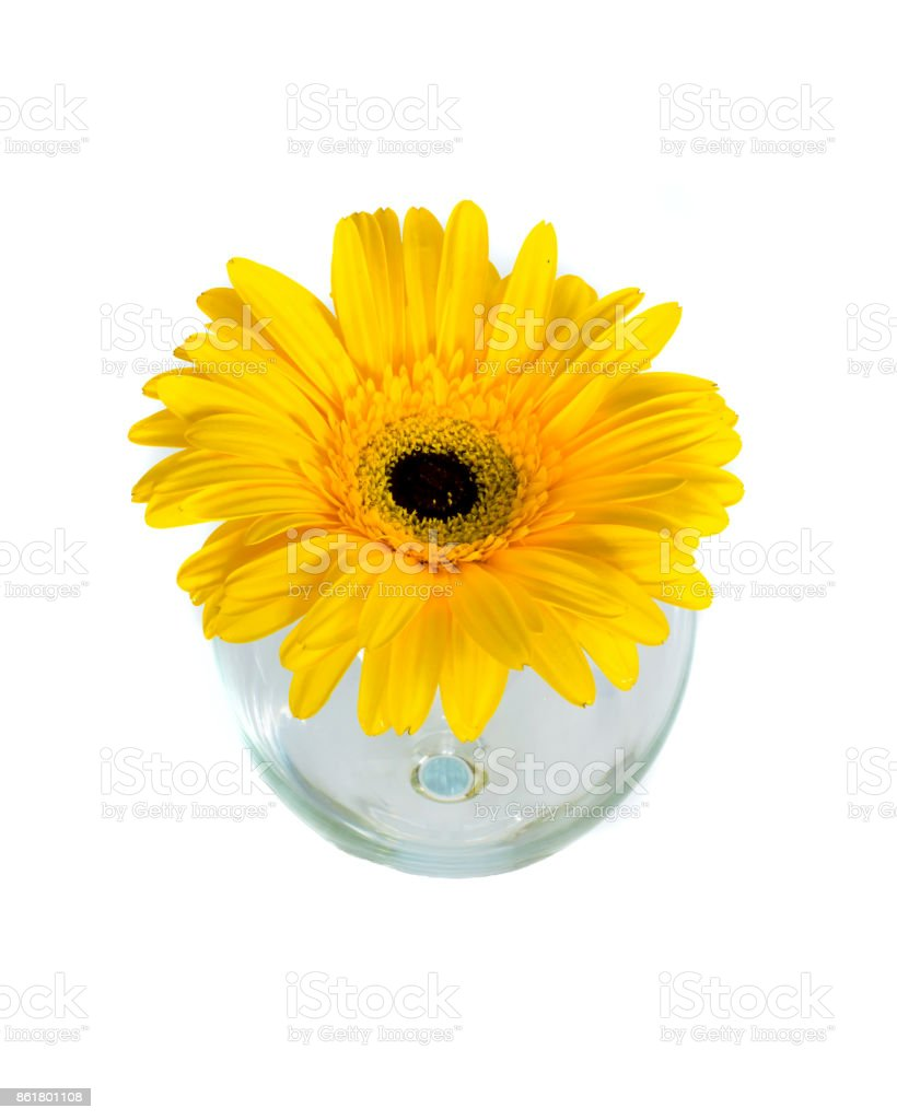 Gerber flower in a vase on a white background, stock photo