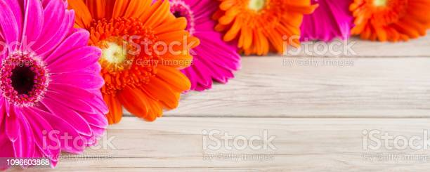 Gerbera and wooden background picture id1096603868?b=1&k=6&m=1096603868&s=612x612&h= xlpzsc36upztndt5tjpexfqvidfb6 bq  x29d5zme=