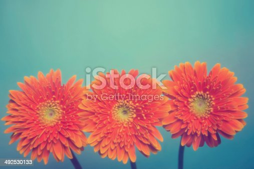 Gerbera on green background.(it's not a digital effect.)