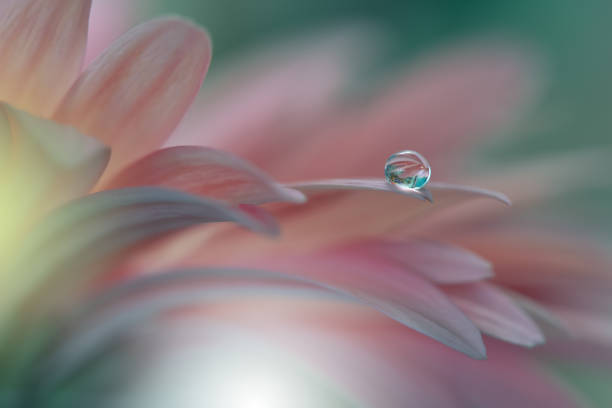 Gerbera daisy .Abstract macro photo with Flowers and water drops.Artistic Background for desktop. Flowers made with pastel tones.Tranquil abstract closeup art photography.Print for Wallpaper.Floral fantasy design. stock photo