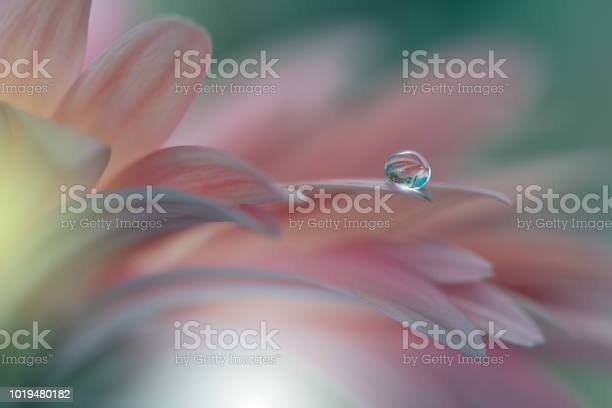 Photo of Gerbera daisy .Abstract macro photo with Flowers and water drops.Artistic Background for desktop. Flowers made with pastel tones.Tranquil abstract closeup art photography.Print for Wallpaper.Floral fantasy design.