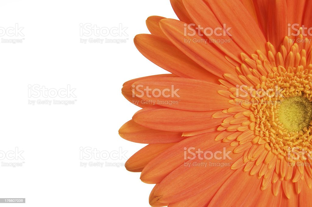 Gerbera Daisy Background Macro Series royalty-free stock photo