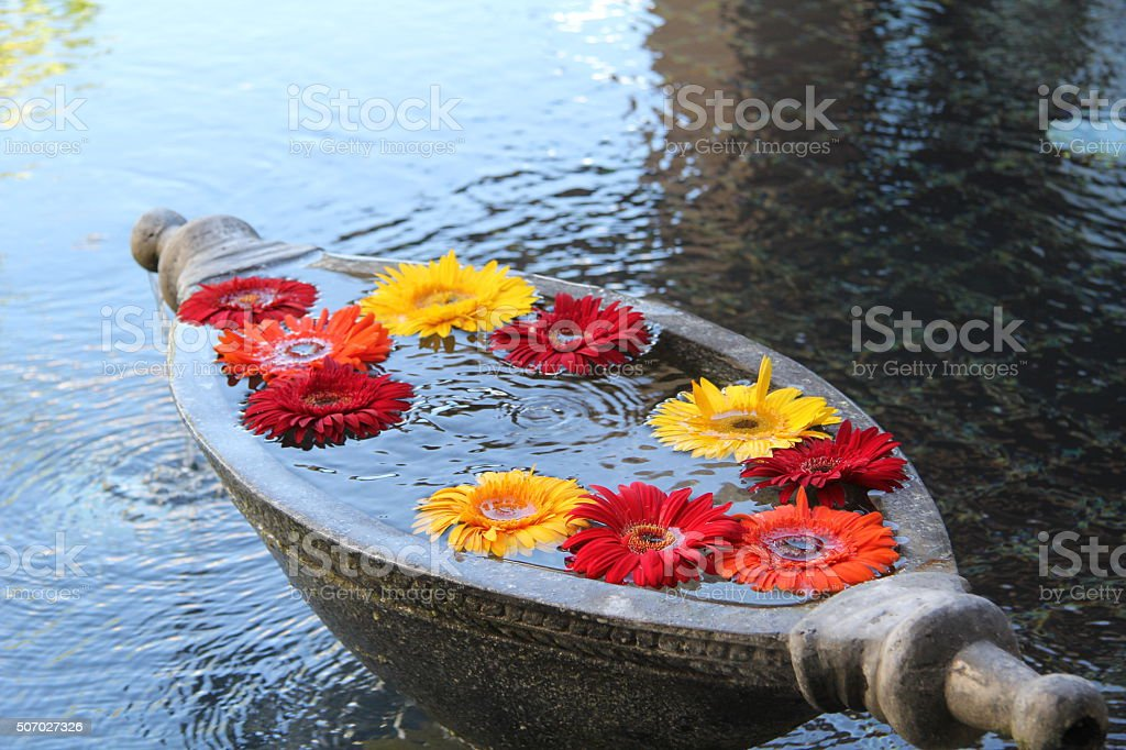 gerbera daisy floating on water stock photo