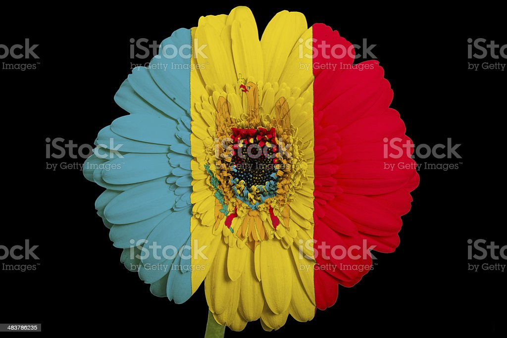 gerbera daisy flower in colors national flag of moldova stock photo