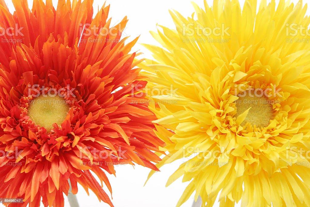 Gerbera daisy flowers royalty free stockfoto