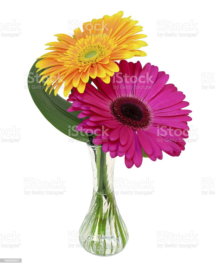 Gerbera Daisy's in a clear vase royalty-free stock photo